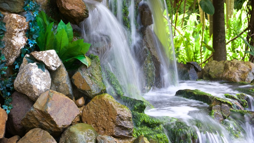 Daydream Island showing a cascade and a river or creek