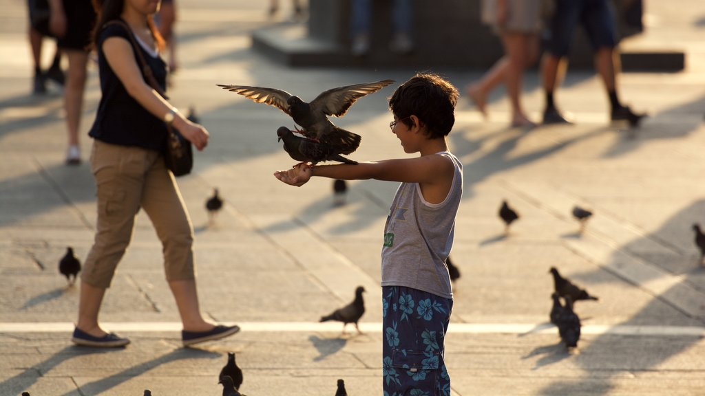 Milan showing a city, street scenes and bird life