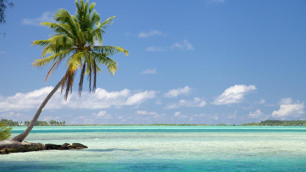 Bora Bora que incluye vistas generales de la costa, escenas tropicales y vistas de paisajes