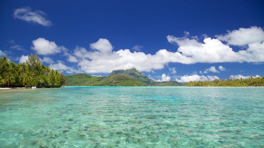 Bora Bora ofreciendo vistas generales de la costa, escenas tropicales y vistas de paisajes