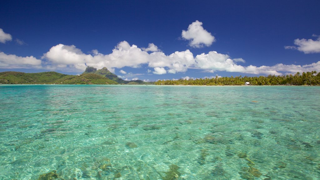 Bora Bora mostrando vistas generales de la costa, escenas tropicales y vistas de paisajes