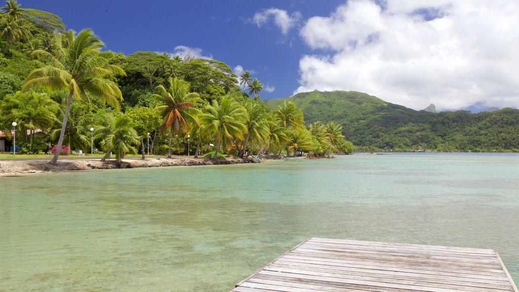 Opoa ofreciendo vistas de paisajes, escenas tropicales y vistas generales de la costa