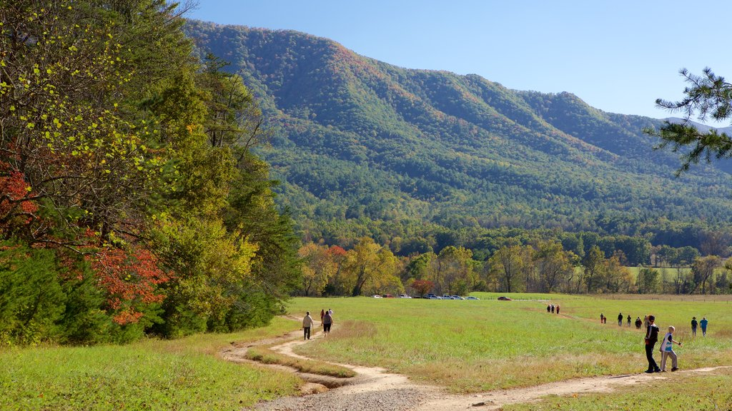 Cades Cove showing mountains and forests as well as a small group of people