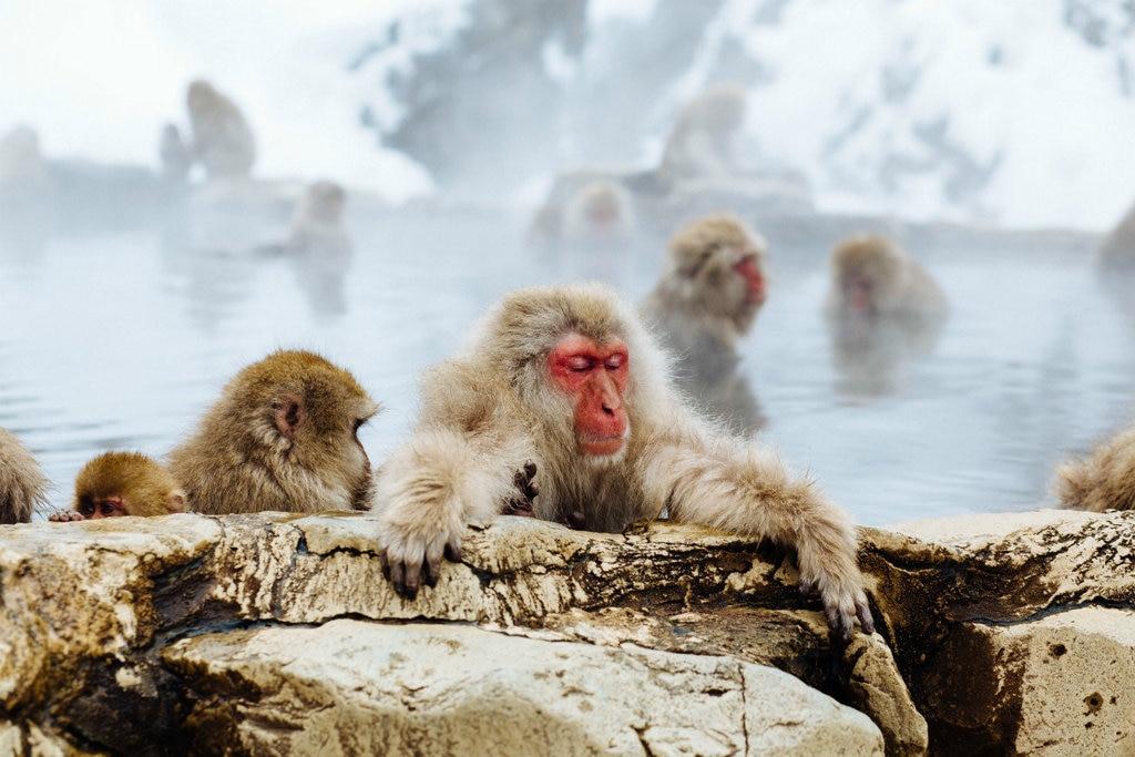 onsen-makaken-1024x683.jpg