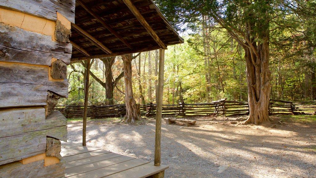 Cades Cove ofreciendo una casa, patrimonio de arquitectura y escenas forestales
