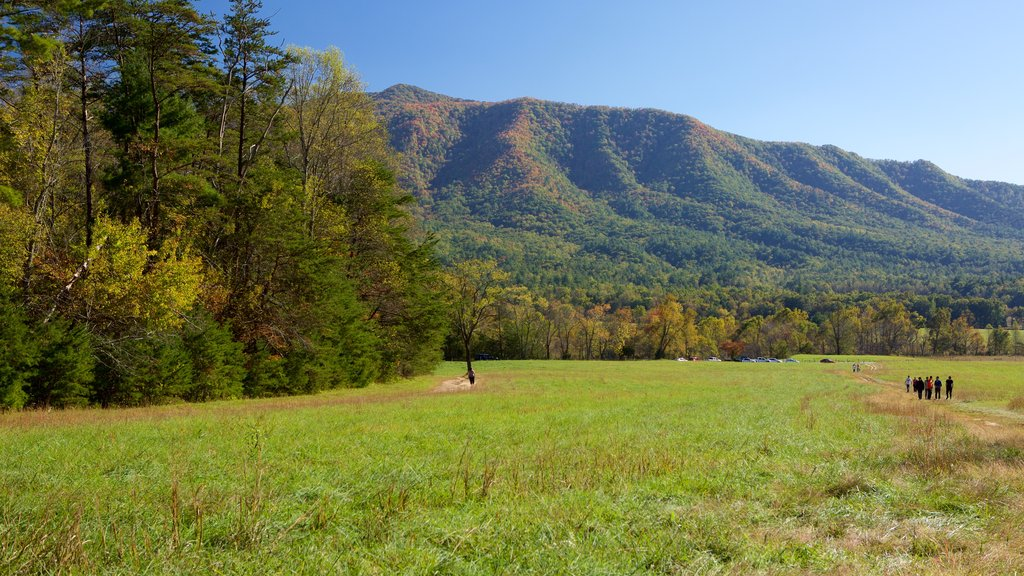 Cades Cove which includes mountains and forest scenes