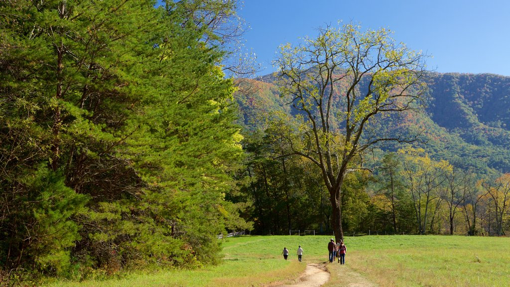 Cades Cove showing mountains and forests