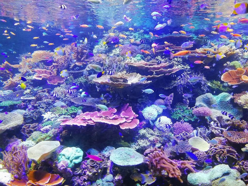 korallen-1024x768.jpg