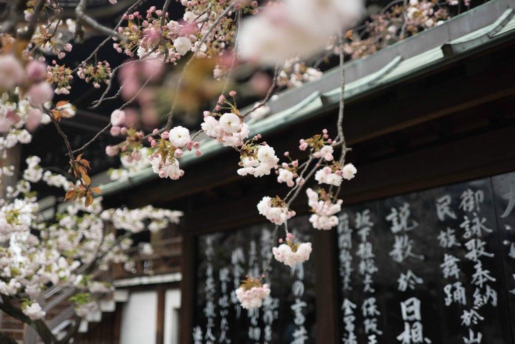 sakura-japan-1024x684.jpg