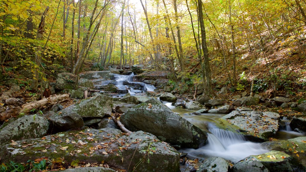 Shenandoah National Park which includes forest scenes and a river or creek