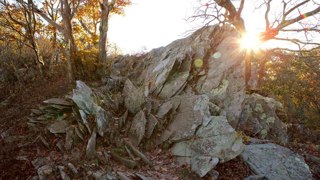 Shenandoah National Park showing forests