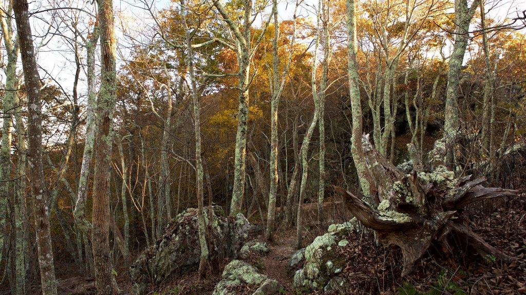 Shenandoah National Park featuring forest scenes