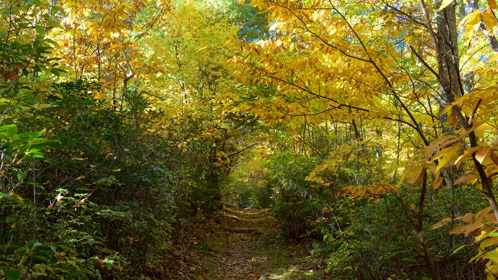 Mary\'s Rock Summit Trail which includes forests