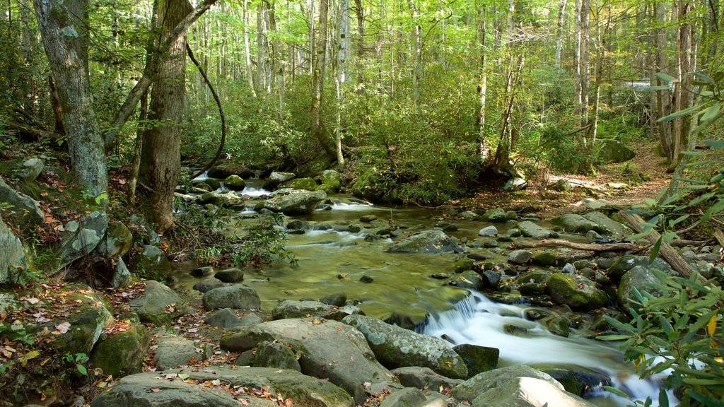 Great Smoky Mountains National Park featuring forest scenes, tranquil scenes and a river or creek
