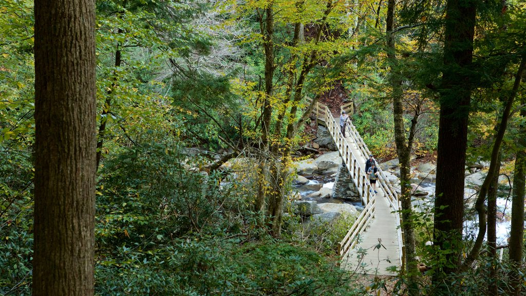 Great Smoky Mountains National Park showing a river or creek, forests and a bridge