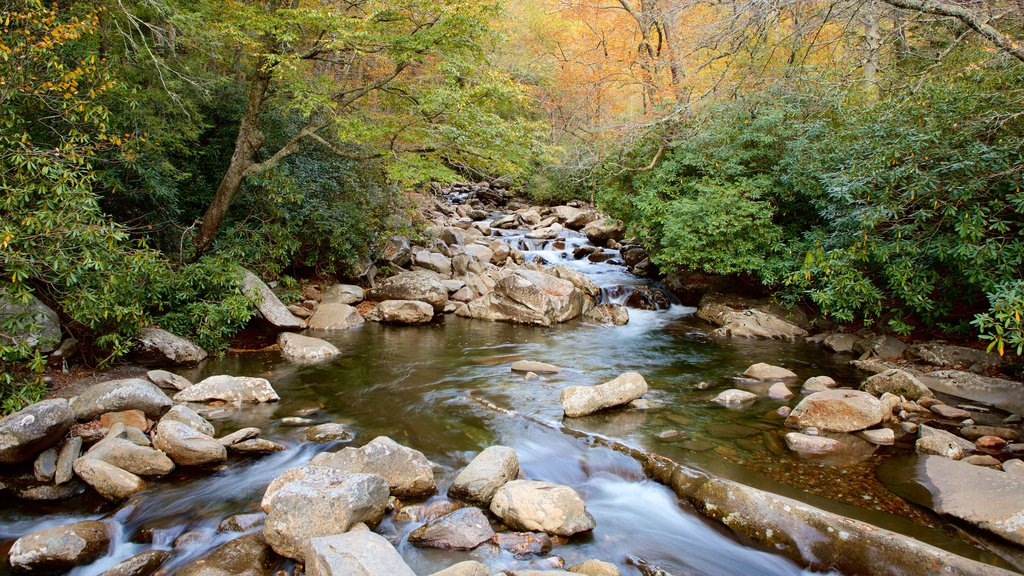 Great Smoky Mountains National Park showing tranquil scenes, forests and a river or creek