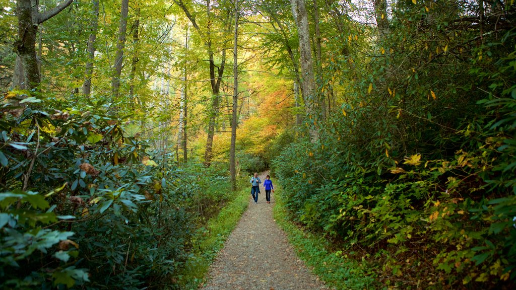 Great Smoky Mountains National Park featuring tranquil scenes, forests and hiking or walking