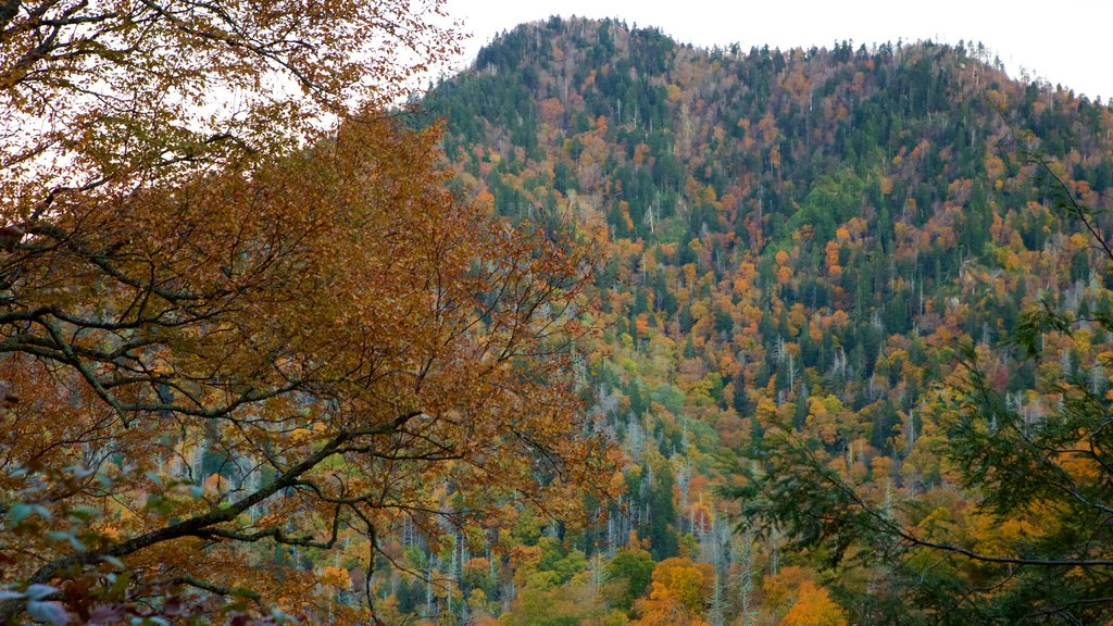 Chimney Tops which includes mountains and autumn leaves