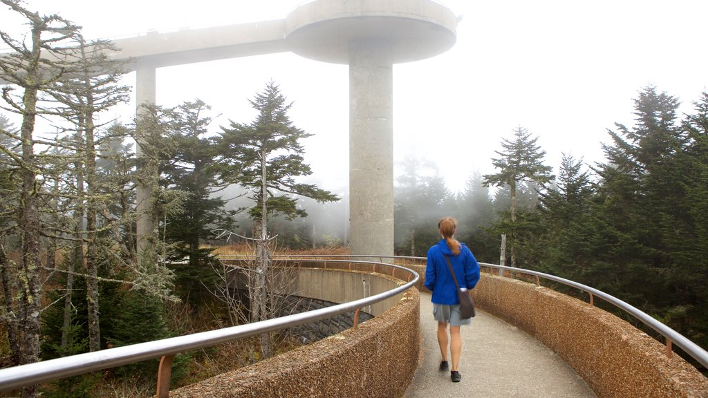 clingmans dome weather - 1024×576