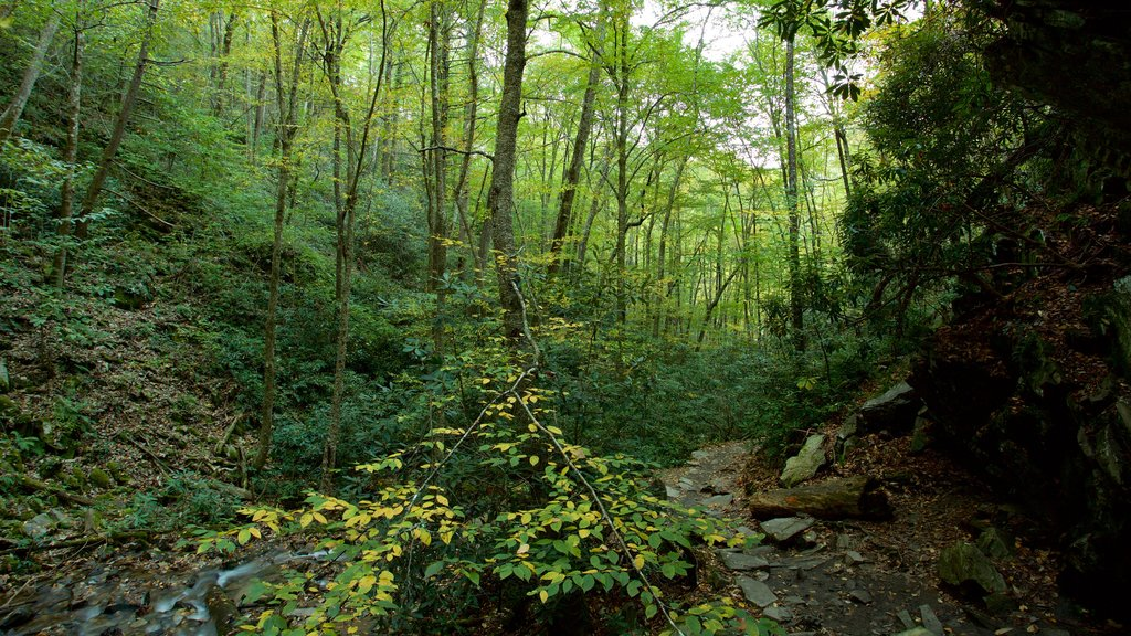 Great Smoky Mountains National Park showing a river or creek and forests