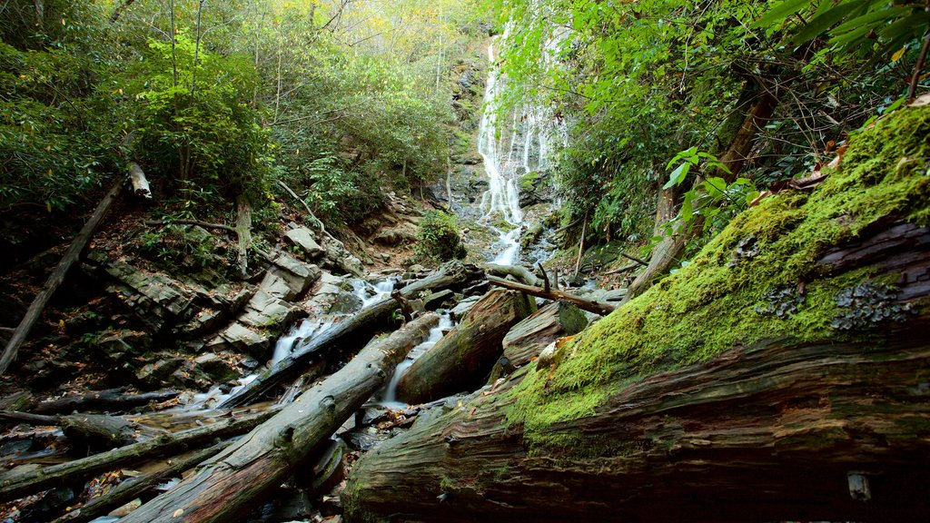 Great Smoky Mountains National Park featuring a waterfall and forest scenes