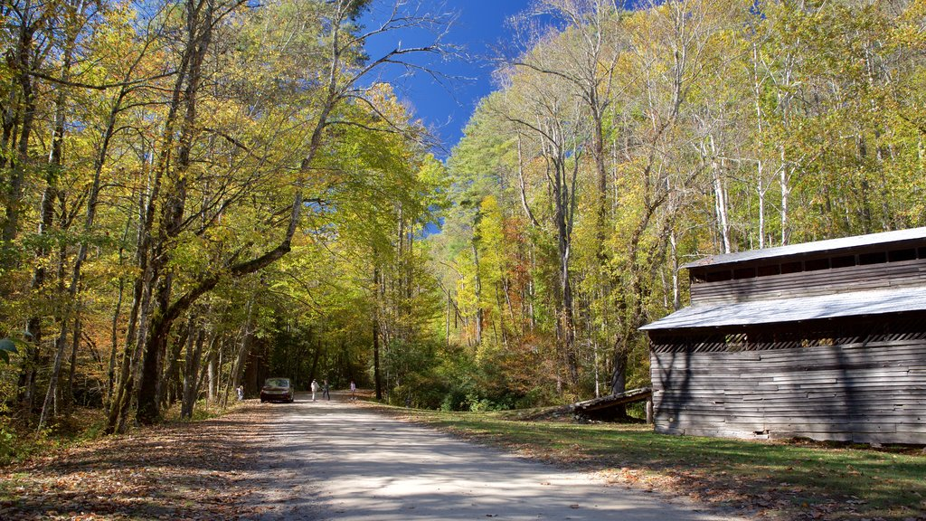 Cataloochee Valley which includes forests and a garden