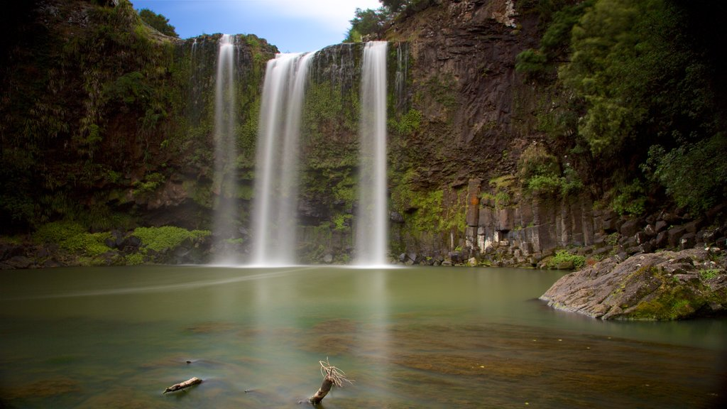 Whangarei Falls featuring a river or creek, a waterfall and forests