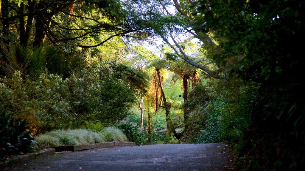 Pukekura Park featuring forest scenes