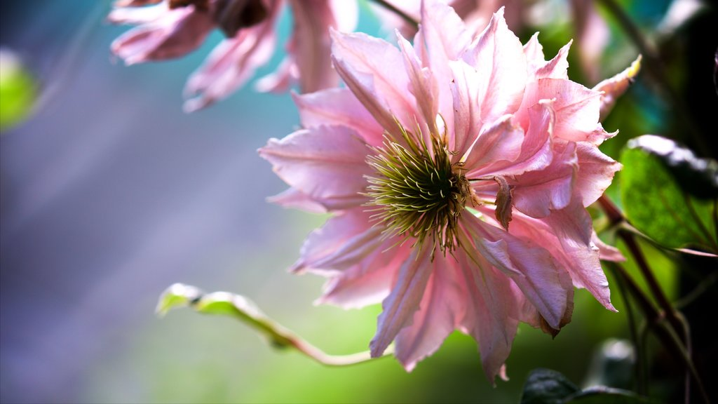 Pukekura Park which includes flowers