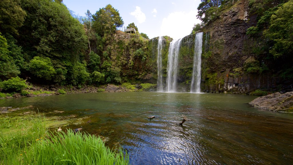 Whangarei Falls showing a cascade, forest scenes and a river or creek