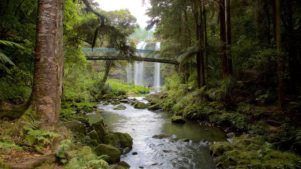 Whangarei Falls showing a bridge, forest scenes and a waterfall