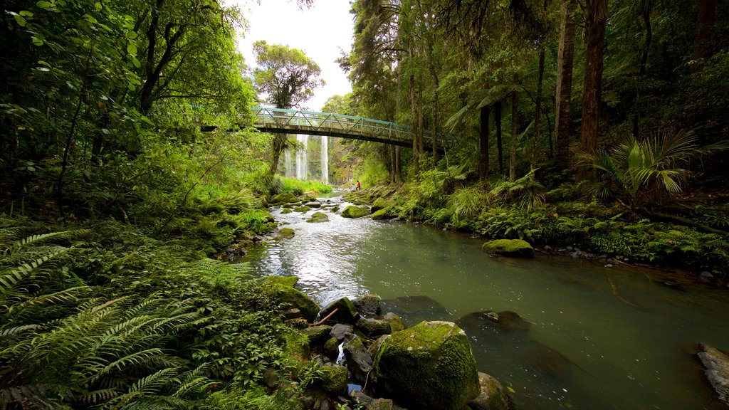 Whangarei Falls which includes forests, a waterfall and a bridge