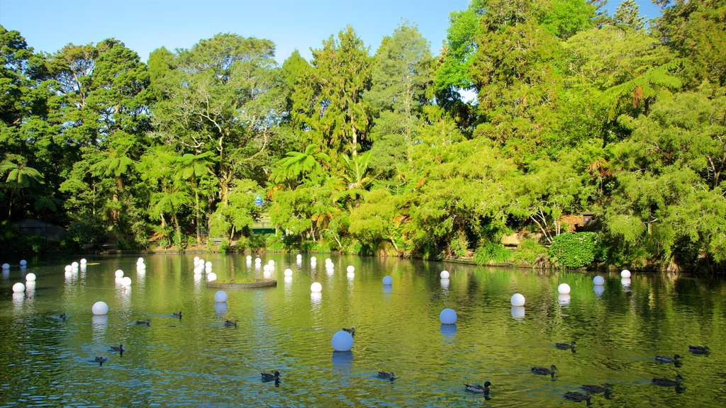 Pukekura Park which includes a park, bird life and a lake or waterhole