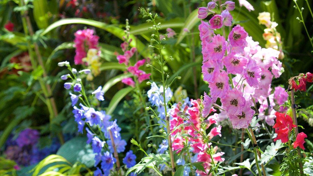 Pukekura Park featuring flowers