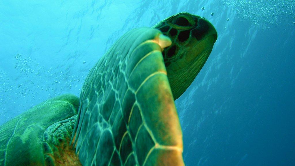 Maldives showing marine life