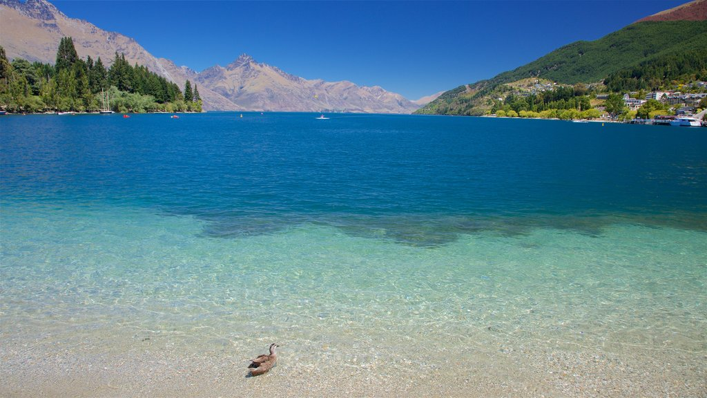 Otago which includes a lake or waterhole and bird life