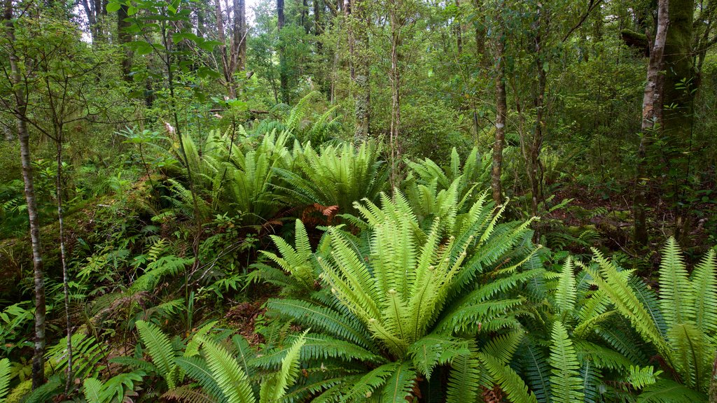 Isla del Sur mostrando selva