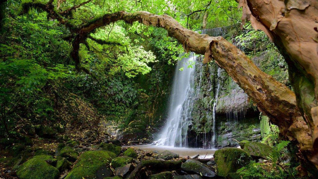 Cascadas Matai mostrando escenas forestales, un estanque y una catarata