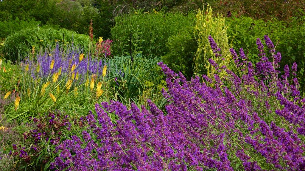 Jardín botánico de Christchurch que incluye flores silvestres