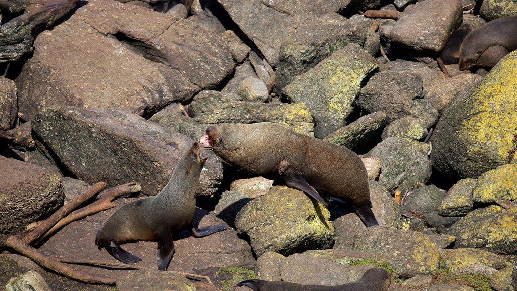 Tauranga Bay Seal Colony which includes marine life and rugged coastline