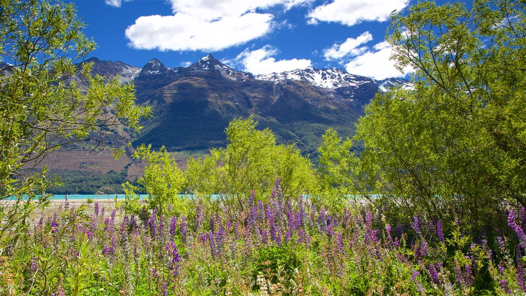 Glenorchy which includes mountains, wildflowers and a lake or waterhole