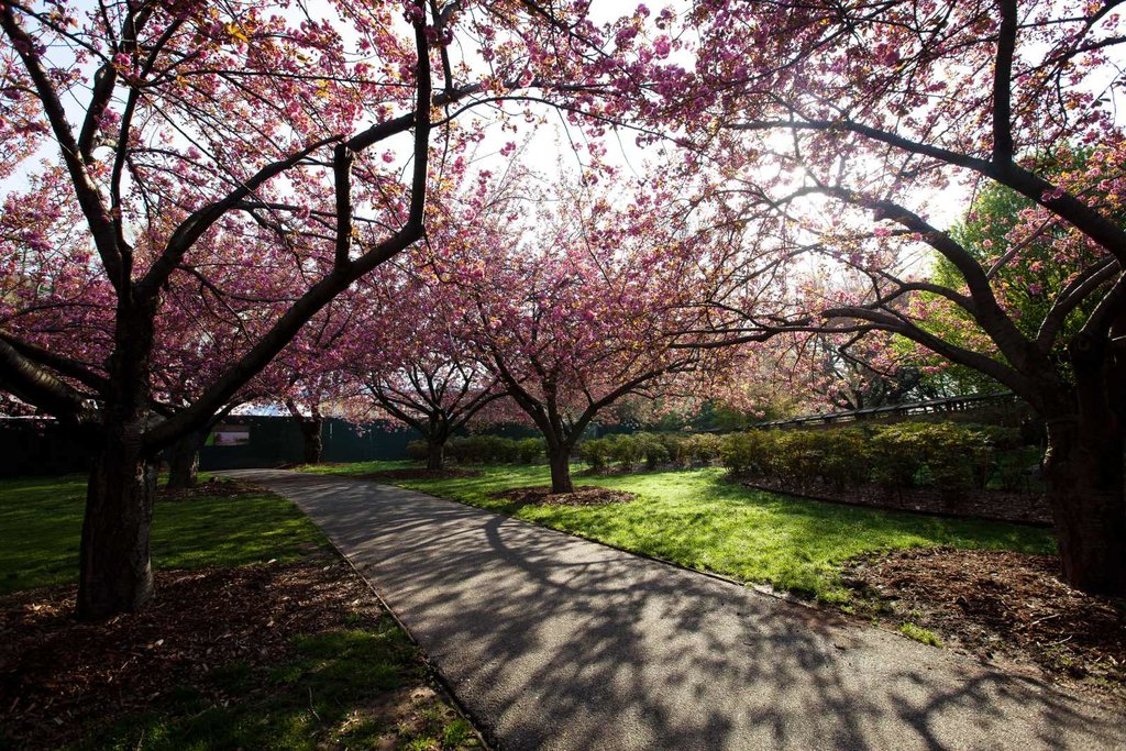 Brooklyn_Botanic_Garden.JPG?1537278450