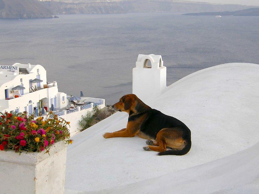Dogs_Life_%281492271240%29.jpg?1565681627