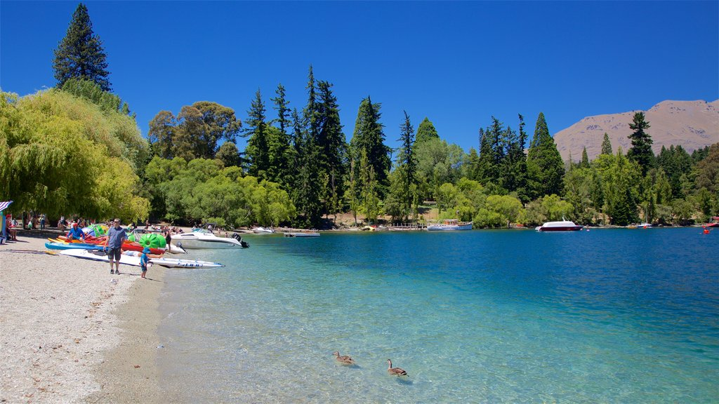 Queenstown Beach showing a pebble beach, kayaking or canoeing and bird life