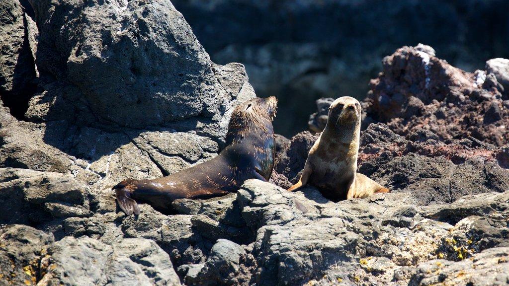 Akaroa featuring marine life and rugged coastline