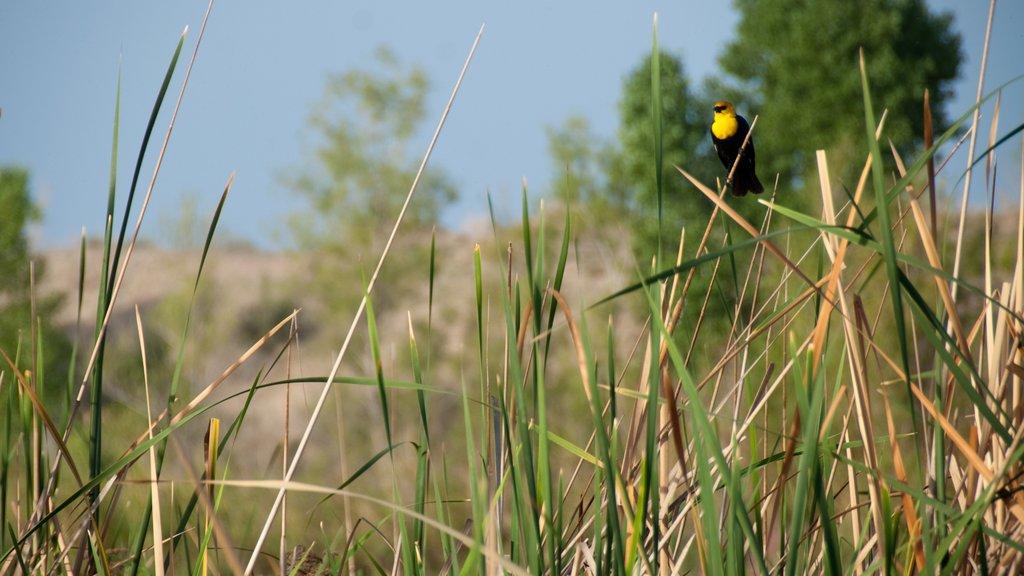 Yuma featuring bird life and wetlands