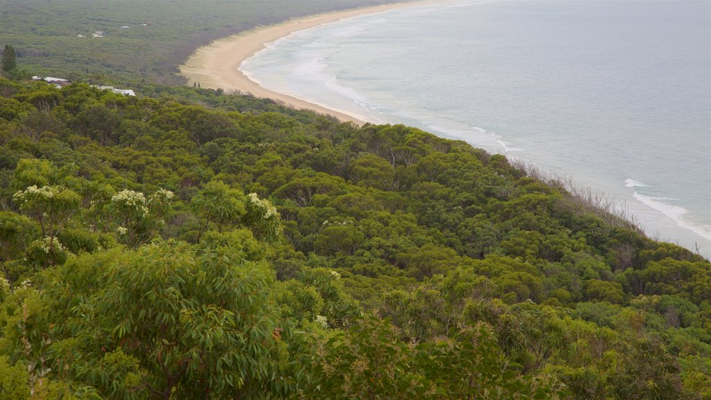 Rainbow Beach featuring general coastal views