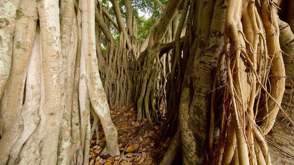 Queens Park ofreciendo selva