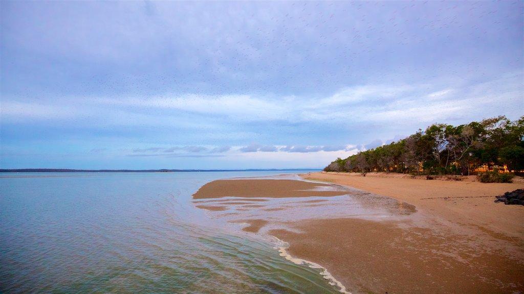 Urangan mostrando vistas generales de la costa y una playa de arena