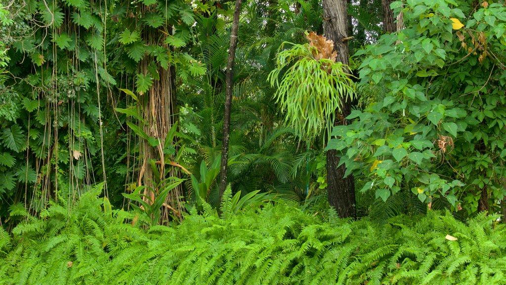 Jardín botánico de la bahía de Hervey que incluye selva